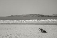 Essaouira plage 020