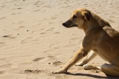 Essaouira plage 03