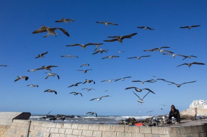 Essaouira port 02