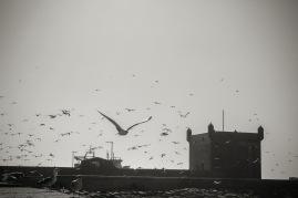 Essaouira port 04