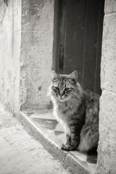 Essaouira souk 04