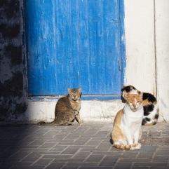 Essaouira souk 06