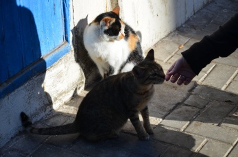 Essaouira souk 08