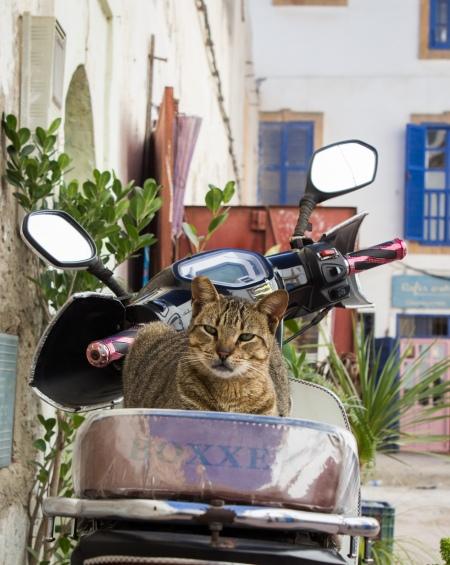 Essaouira souk 09