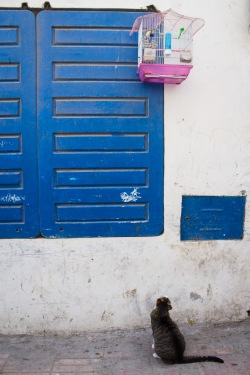Essaouira souk 15